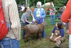 Livestock care is always a popular session.