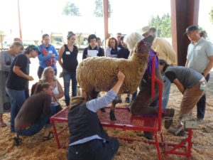 Dairy animals will be the animal focus for Small Farm School 2019.