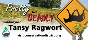 Tansy ragwort billboard
