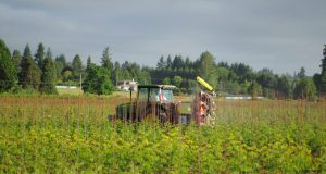 Smart sprayer trials were held at Hans Nelson and Son Nursery in Boring, OR.