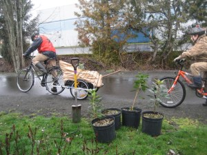 Creative plant delivery