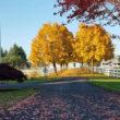 fall 2017 at farm cropped