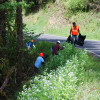 Garlic Mustard Control in Clackamas County  Photo by CCSWCD