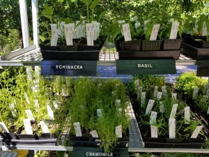 You can purchase vegetable and herb starts at the farmers market too.