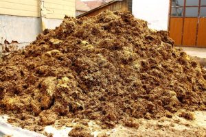 iStock-manure-pile-Medium