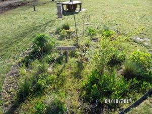 One of five oak habitat islands at Springwater Environmental Sciences School