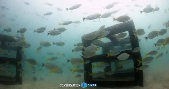 Artificial reef fish