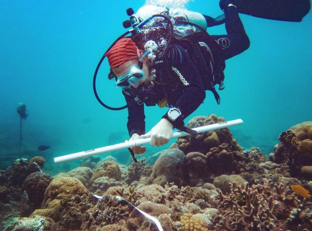 reef survey conservation diver