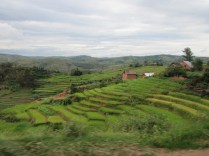Terraced Rice Fields: A common sight along the road when driving through Madagascar