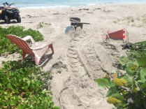 Green sea turtle nest between beach chairs