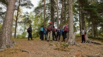 Talking forest regeneration