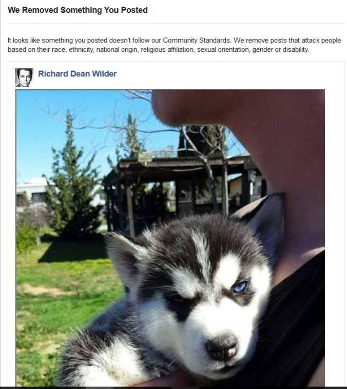 Facebook puppy