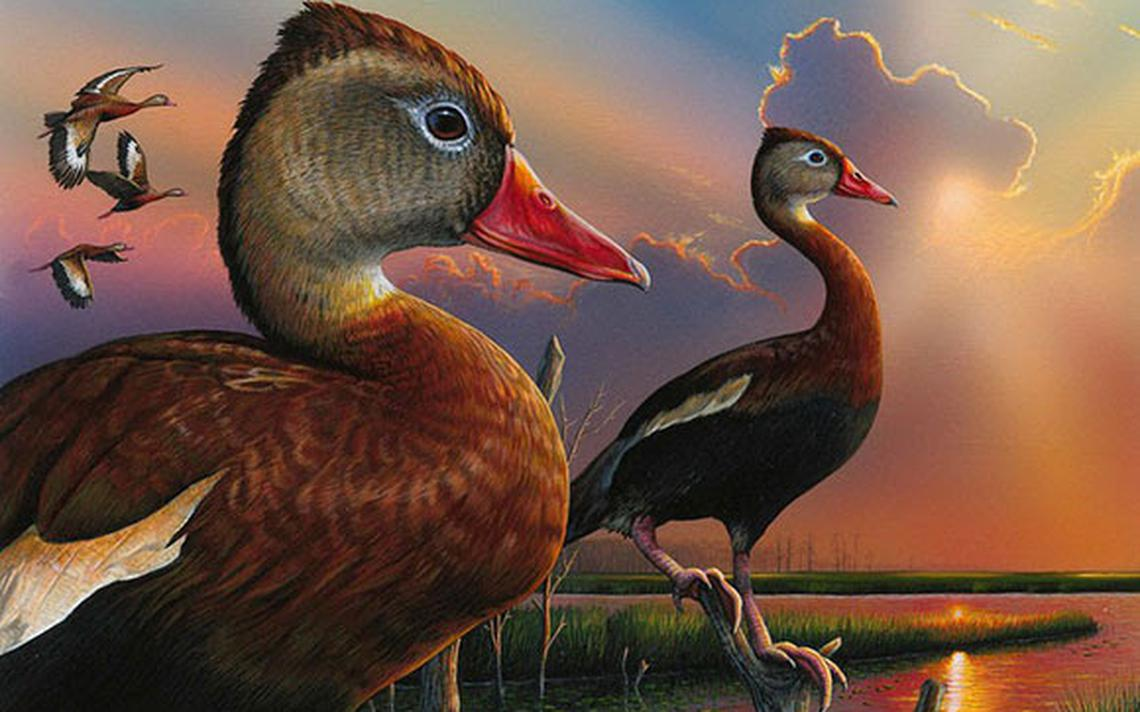 Alabama artist wins Federal Duck Stamp contest . . .