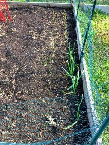 Conshohocken Community Garden Planted 4