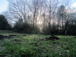Moles have been busy in the Wilderness meadow.