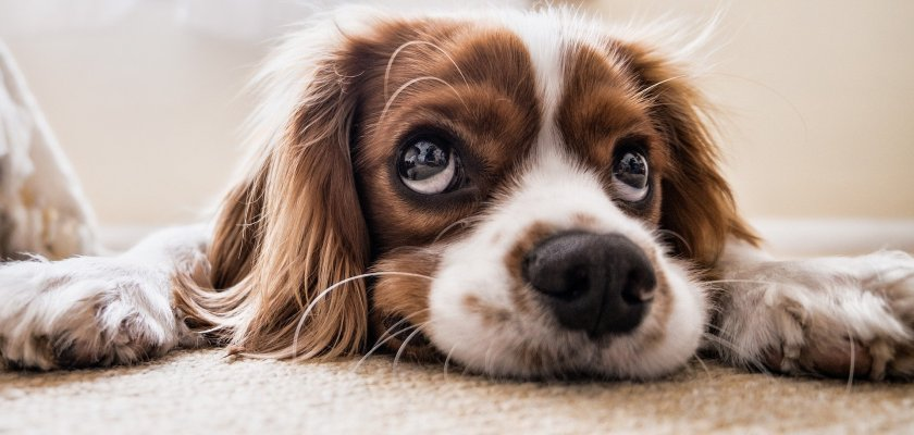 What You Need To Know About the Acana & Orijen Pet Food Allegations Consider The Consumer