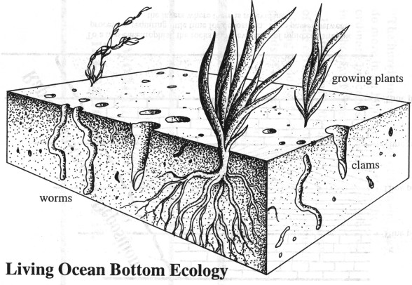 bioturbation