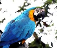 Sognare il proprio pappagallo che vola via ma ritorna: sogno di Paola