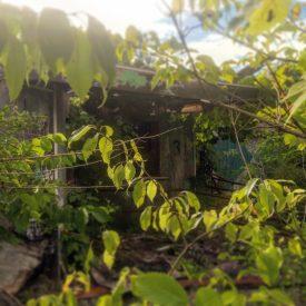 Abandoned Chippawa Lake Amusement Park