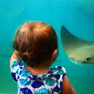 Newport Aquarium with a bay