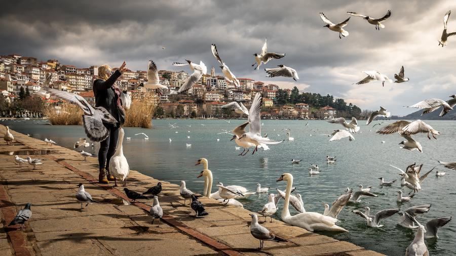 Trois loisirs qui font du mal aux animaux - Canards