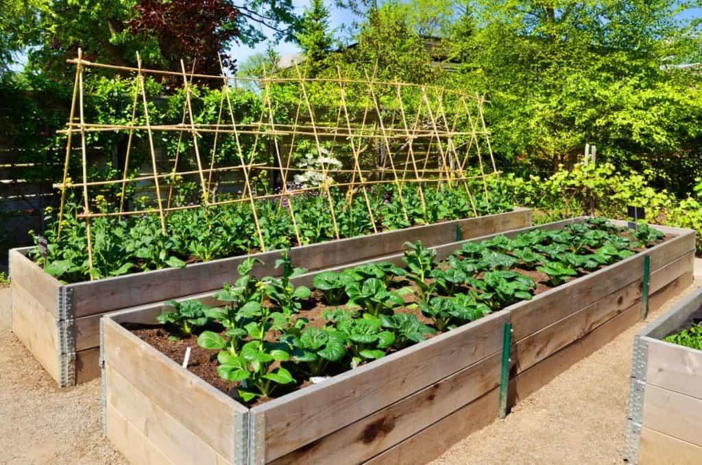 13 Gardening Experts On Gardening Tips For Beginner Plus Tips From Reddit Users
