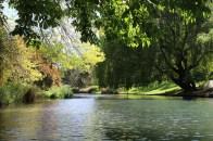 Punting through the Botanic Gardens