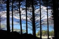 Lake Wakatipu through the trees