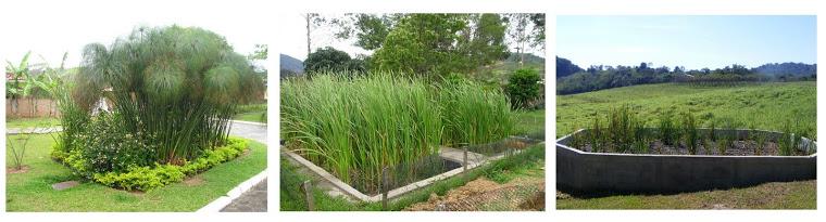 Wetlands Construidos