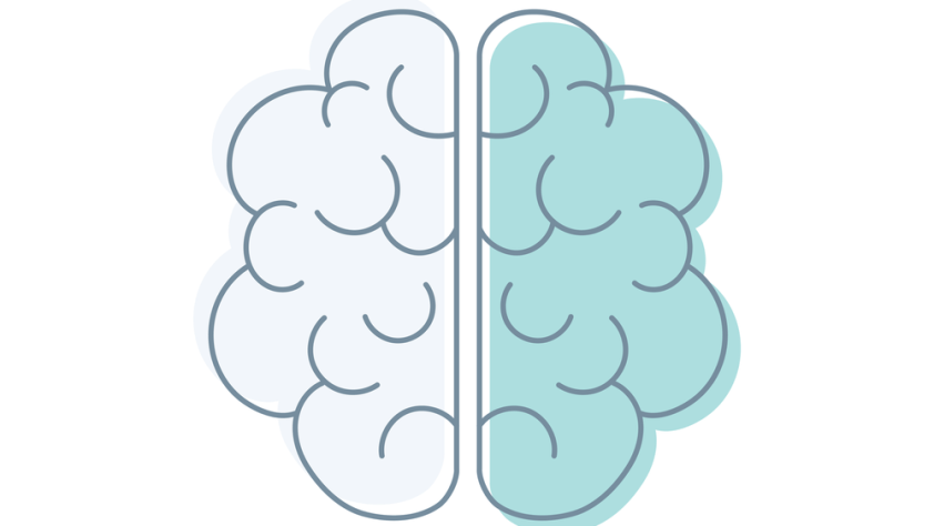 A brain separated into 2 sections based on the sides of the brain