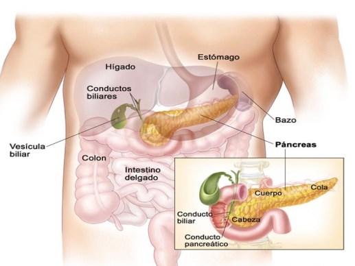 Para qué sirve el páncreas? | MÉDICO ESPECIALISTA EN DIGESTIVO SANTA ...