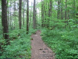Best Practices Analogy - Trail