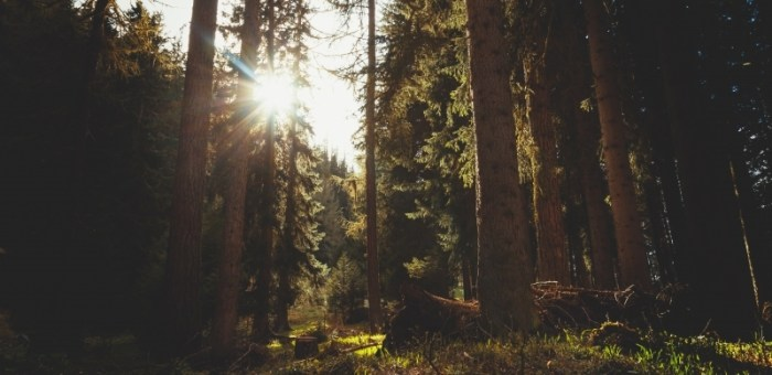 Financement disponible pour l'aménagement durable de nos forêts