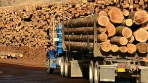 lemn-neprelucrat
