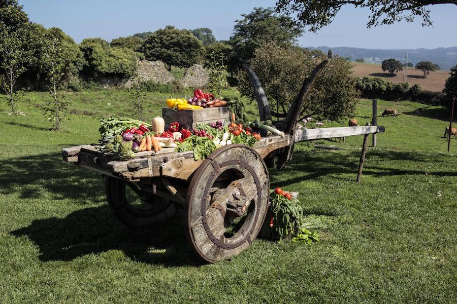 contaconesydeboda-boda-rural contaconesydeboda-boda-rural (45)