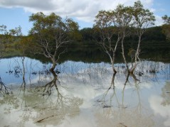 Lake McKenzie (Boorangoora) is visited by 220,000 people annually. Preserving its natural integrity is vital