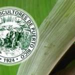 Crean Fondo de Ayuda Agrícola de P.Rico para ayudar sector tras huracán María