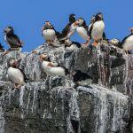 Excremento de las aves marinas aporta nutrientes al planeta