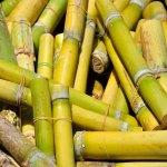 Los contratos de futuros de azúcar cierran mixtos en Nueva York