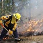 Necesario proteger riqueza biológica de México ante incendios forestales