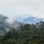 Hallan 93 nuevas especies en Colombia en expediciones realizadas desde 2016