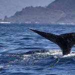Ballenas pigmeas mueren al encallar en Taiwán llenas de bolsas de plástico