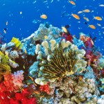 Australia anuncia 313 millones de euros para cuidar la Gran Barrera de Coral