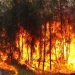 Nicaragua decreta alerta amarilla en varios departamentos por los incendios