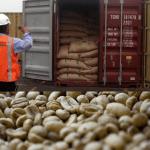 Honduras exporta 680 millones dólares en café, 13 % menos que cosecha pasada