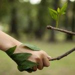 Redes sociales crean engañosa sensación de conciencia por el medioambiente