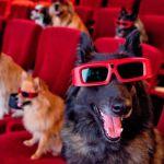 """Cine, yoga y """"brunch"""" con su perro en el Festival de Cine Canino de Miami"""