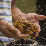 Fotógrafa mexicana captura la vida entre abejas