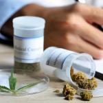 Próximo gobierno de México buscará que marihuana se use con fines medicinales
