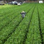 Sector agroalimentario latinoamericano busca frenar la pobreza rural